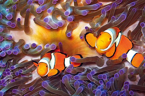 Dive Great Barrier Reef - liveaboard packages - Australia Dive vacations - Australia honeymoon packages - Australia Adventure Vacation