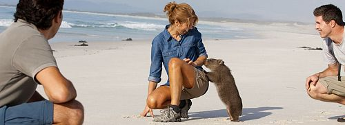 Wombat on the Beach at Bay of Fires, Tasmania