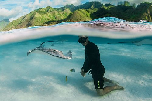 Snorkeling with Magnificent Rays in the Islands of Tahiti