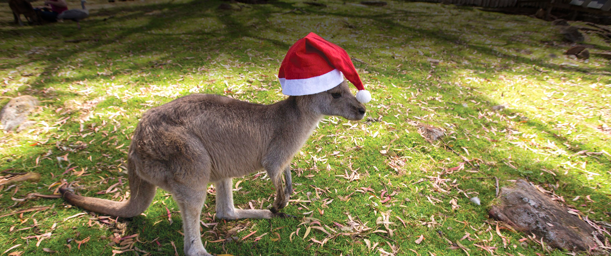 Merry Christmas and Happy Holidays from Down Under Endeavours! - Kangaroo with Santa Hat