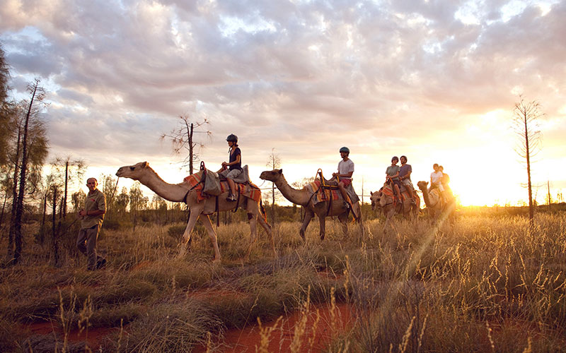 Sunrise camel tour in the Red Centre
