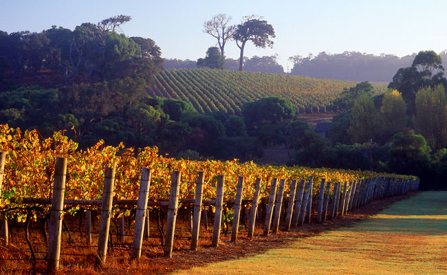 Vineyards of Cape Lodge - Cape Lodge - Margaret River Wine Region