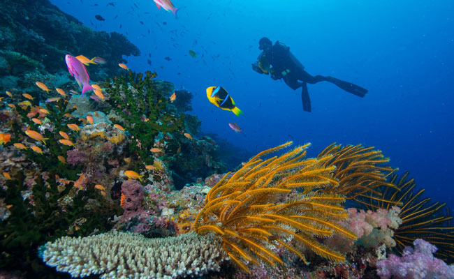 Diving off of Coral Reefs - Matangi Private Island Resort - Fiji Travel - Trip to Fiji