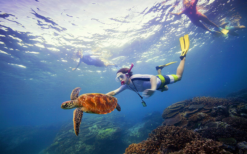 Snorkeling with a green turtle in the Great Barrier Reef