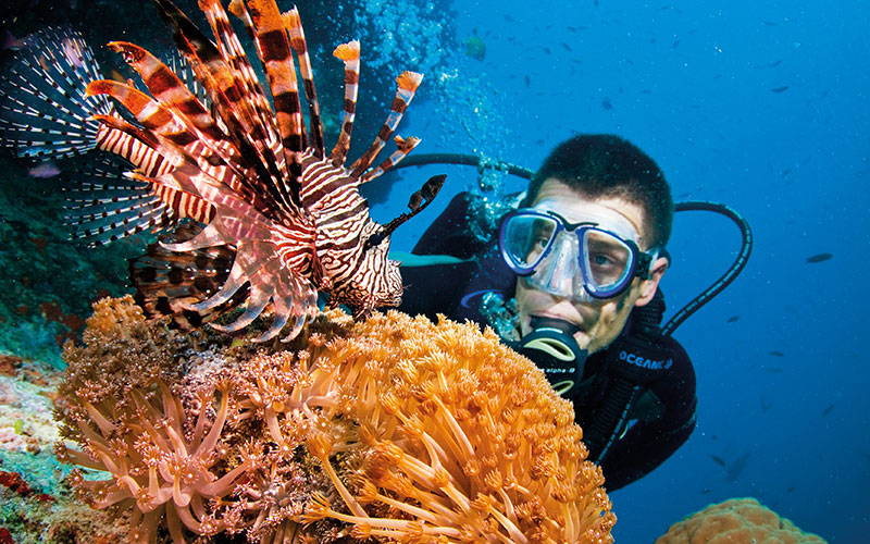Beautiful lionfish in the Great Barrier Reef