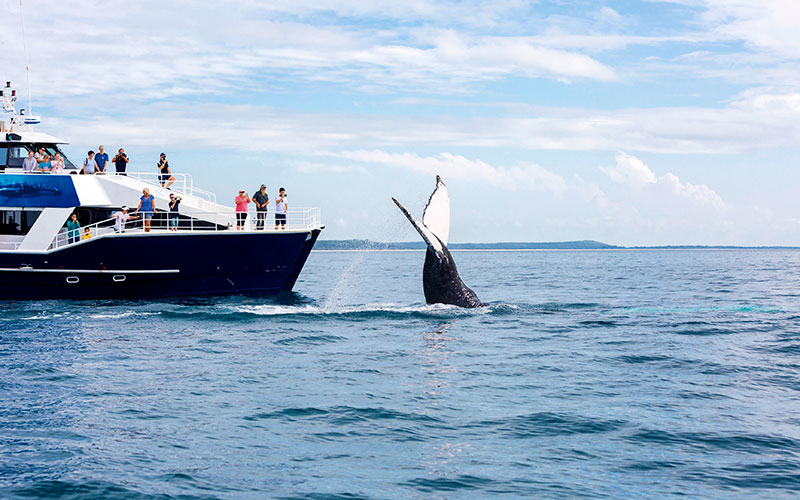 Whalewatching tour in Hervey Bay, Australia