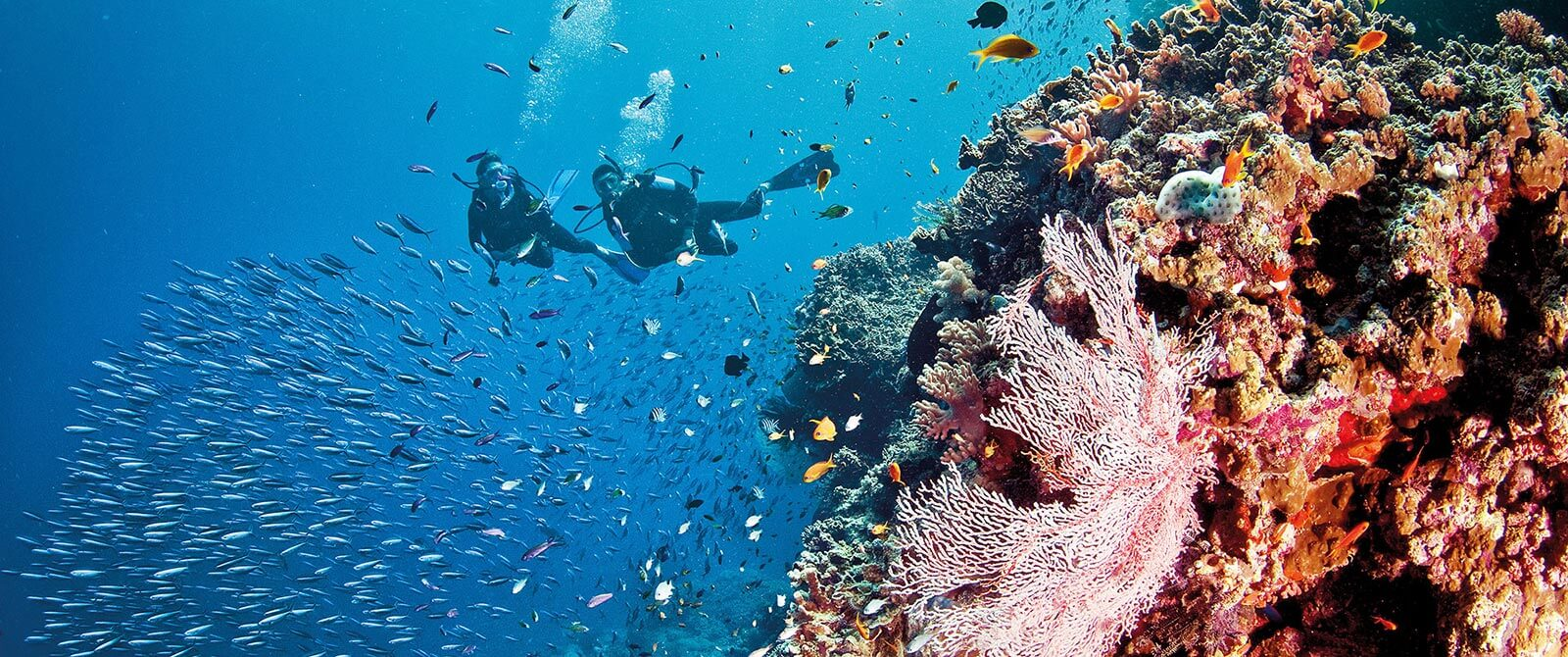 Diving the Great Barrier Reef - Book Your Australia Vacation - Australia Travel Agency