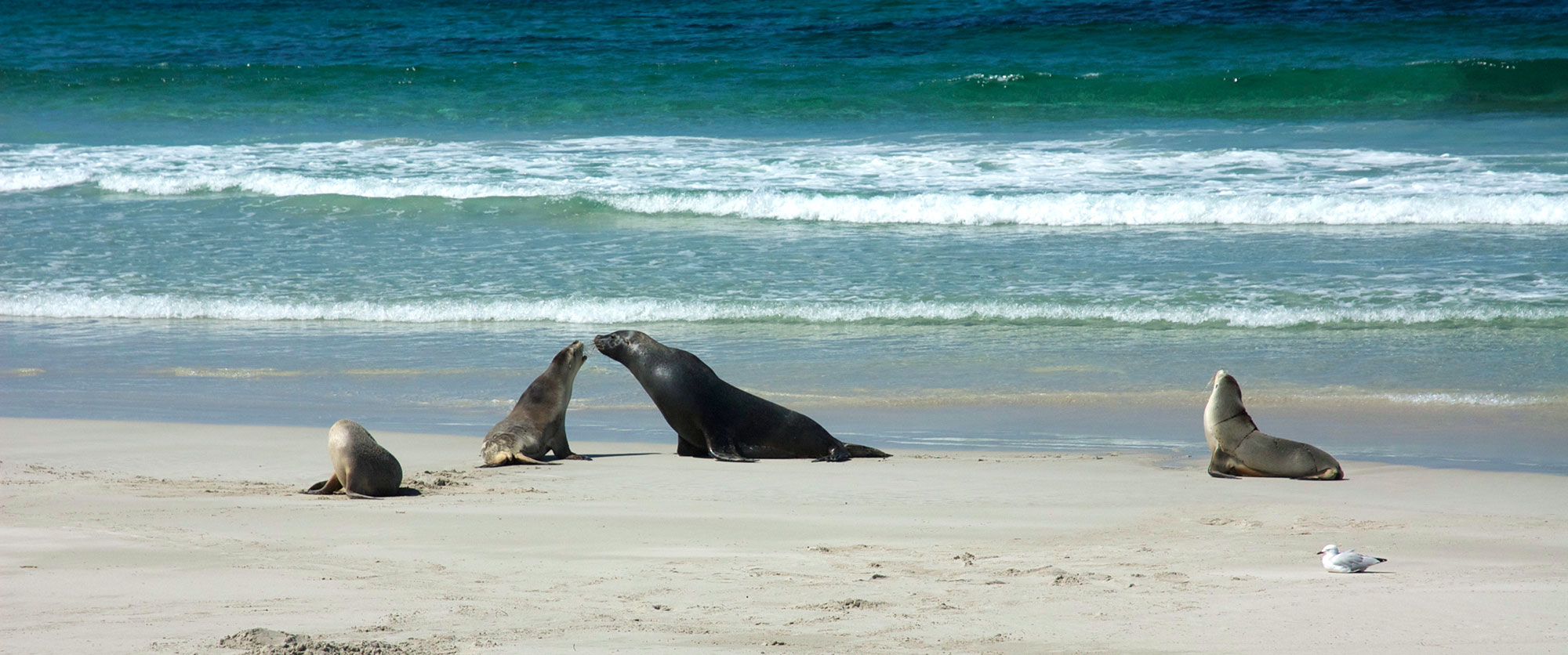 Family Holidays South Australia Package - Exceptional Kangaroo Island