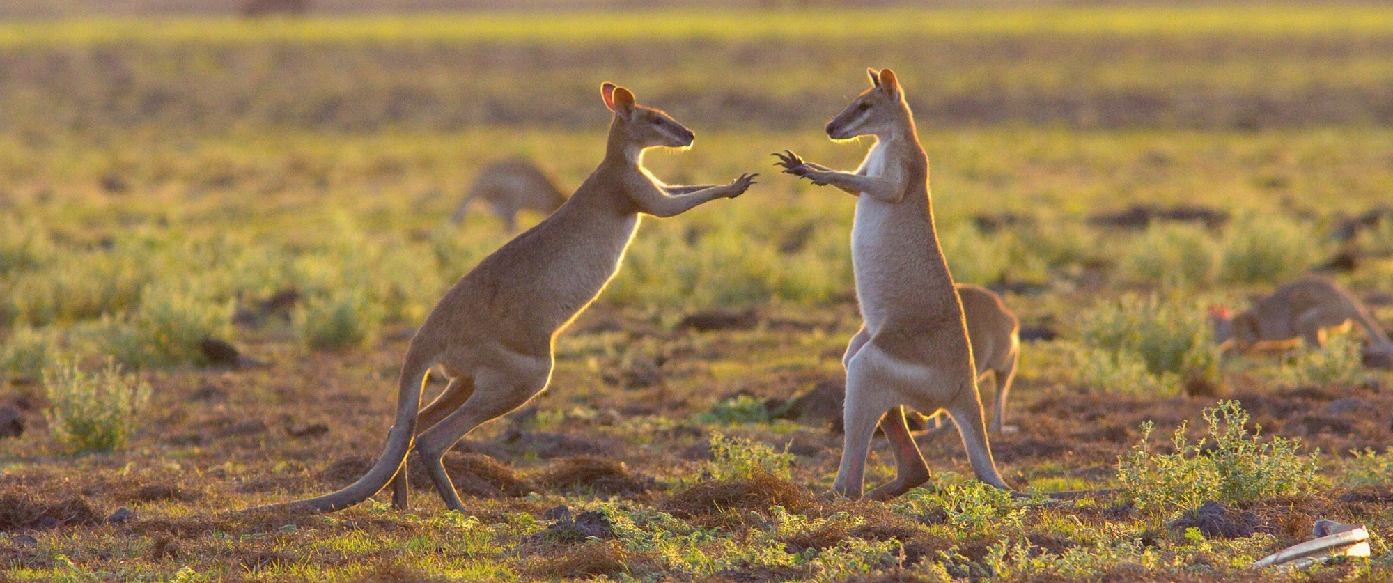 Escorted Australia Vacation Packages: Outback Culture Tour - Wallabies in the Mary River Wetlands, Top End