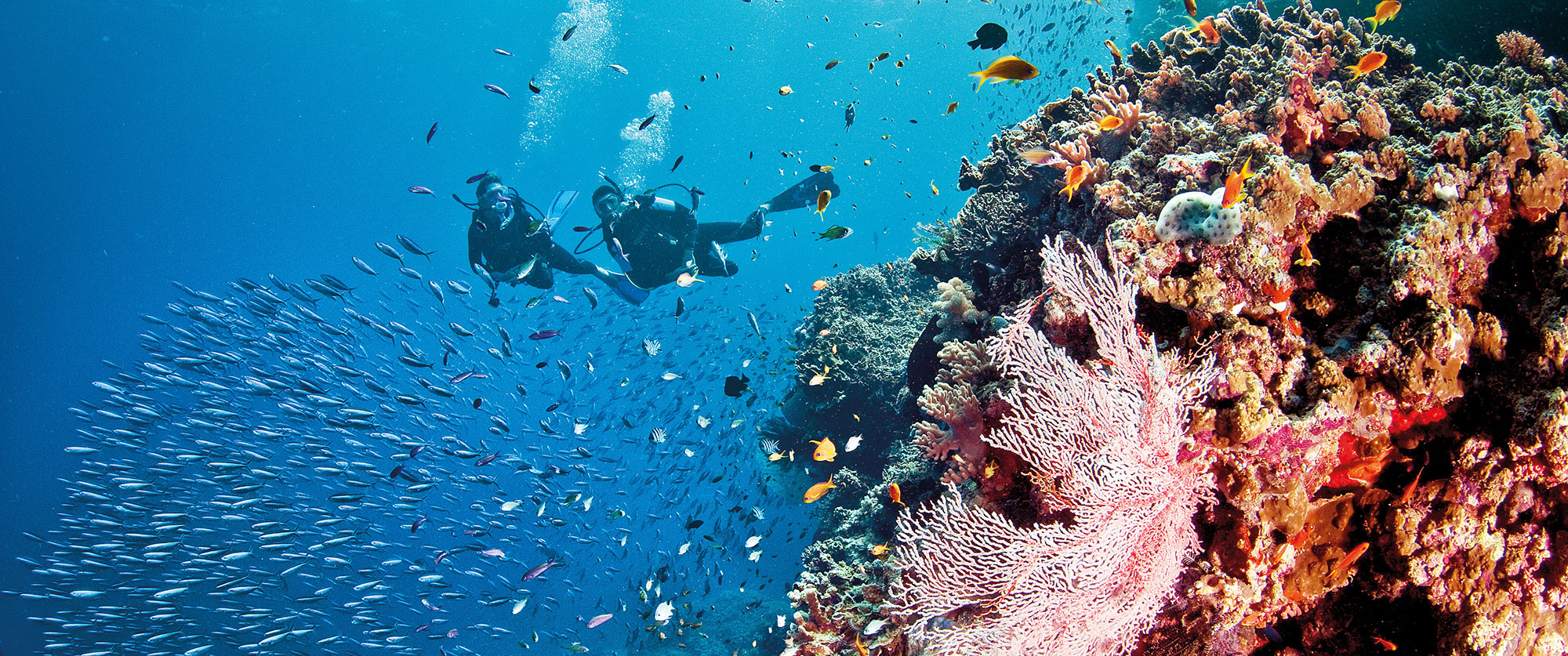 Australia Honeymoon - Snorkel and dive in the Great Barrier Reef, a scuba diver's paradise