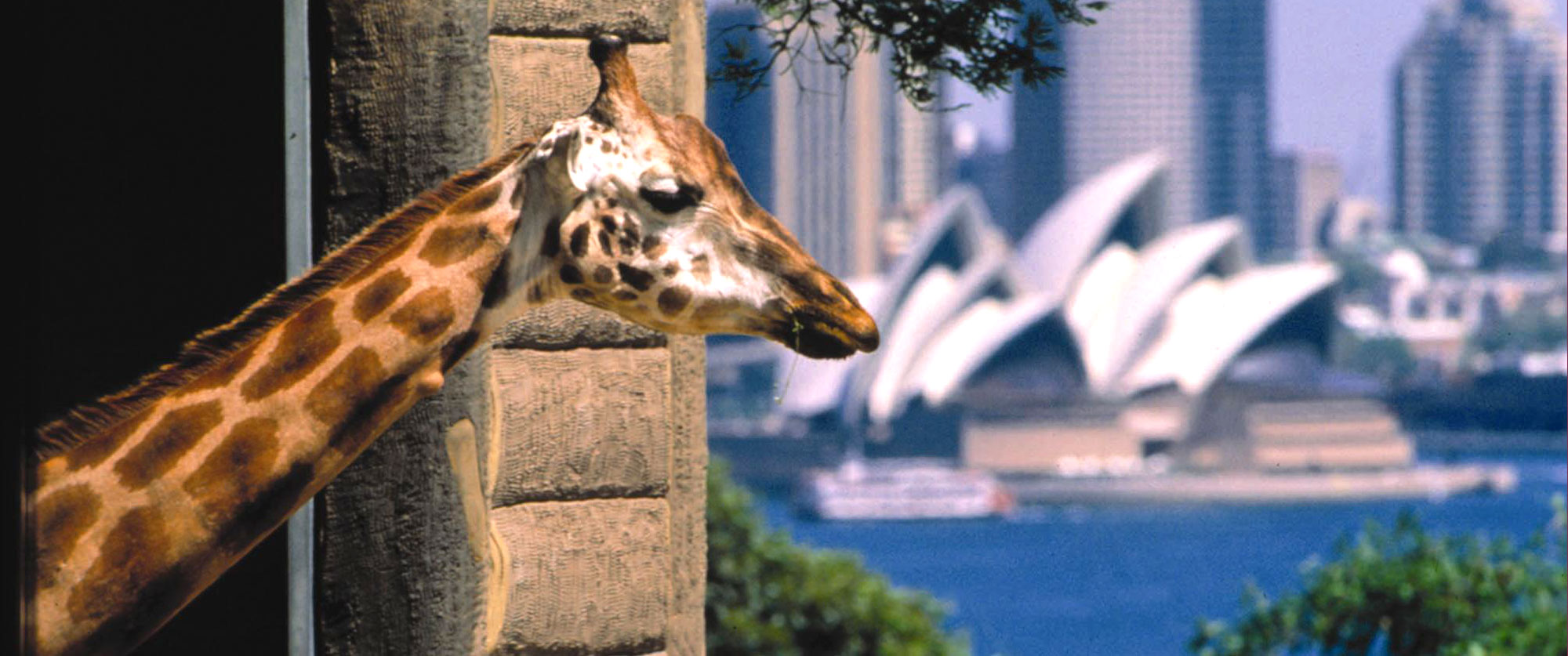 Australian Outback Family Adventure - Sydney Taronga Zoo