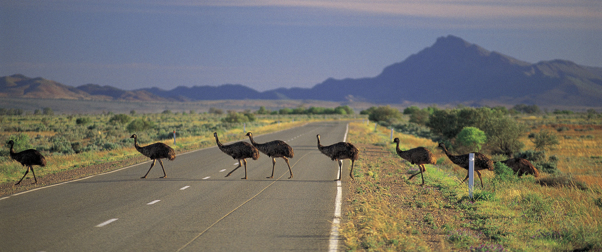 Australia Vacations - Outback Wildlife