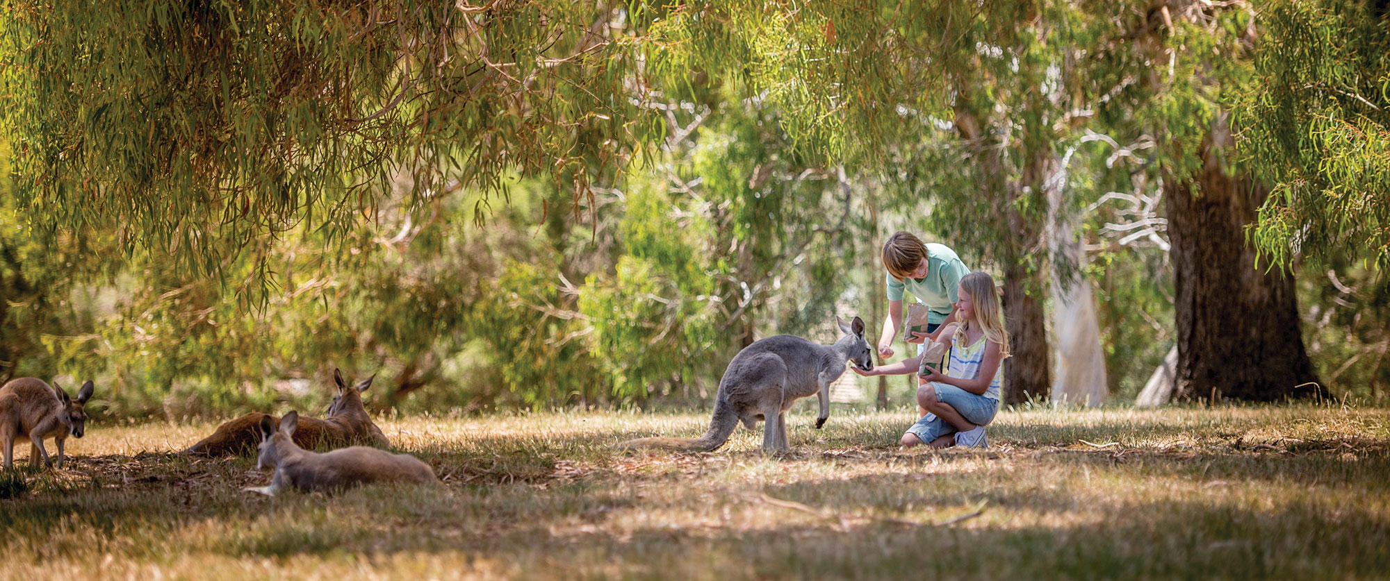 Family Holidays South Australia Package - Adelaide