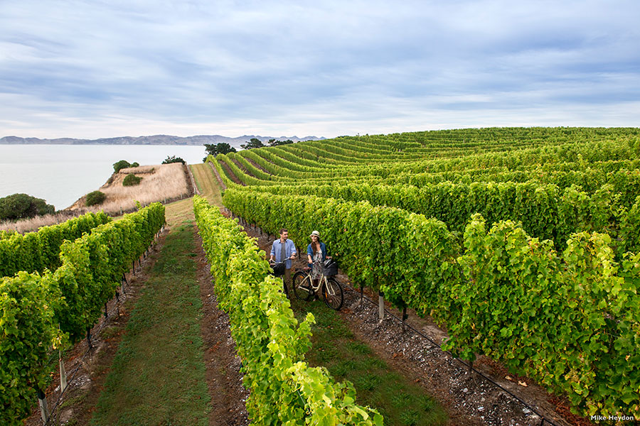 Cycling Among the Vines in Marlborough - Book Your Trip to New Zealand - New Zealand Travel Agency