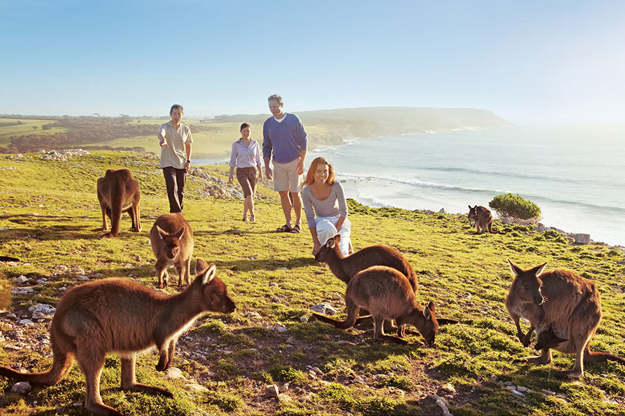 South Australia Travel - Kangaroo Island Family Vacation - Wildlife and Beaches in South Australia