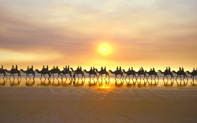 Camel Trekking on Cable Beach at Sunset