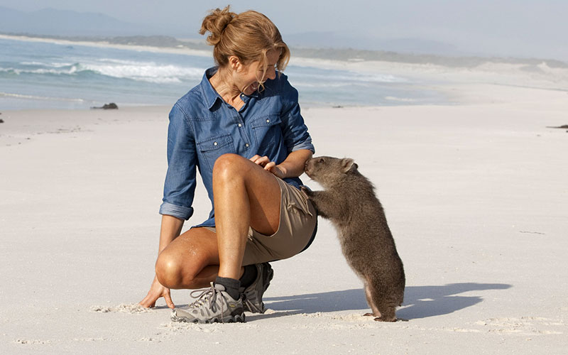 Friendly Wombat on the Beach in Tasmania