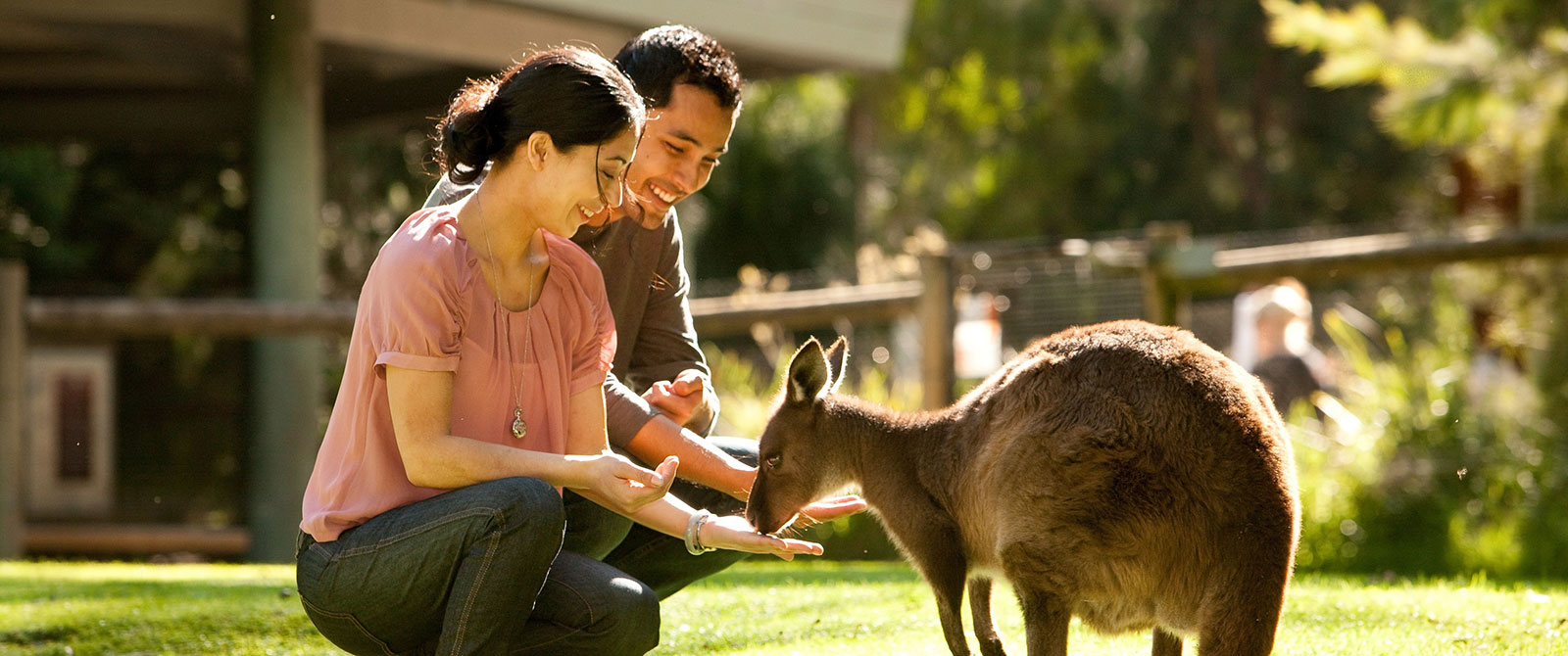 Feeding Kangaroo - Australia New Zealand Vacation Packages
