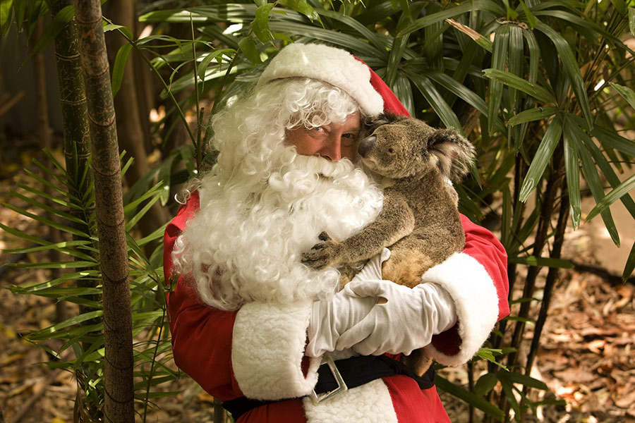sm-05-oct-sat-santa-koala-whitsundays-900x600