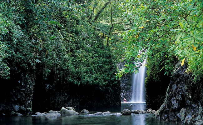 Waterfalls and jungle in Buoma National Park - Taveuni Island - Travel Fiji