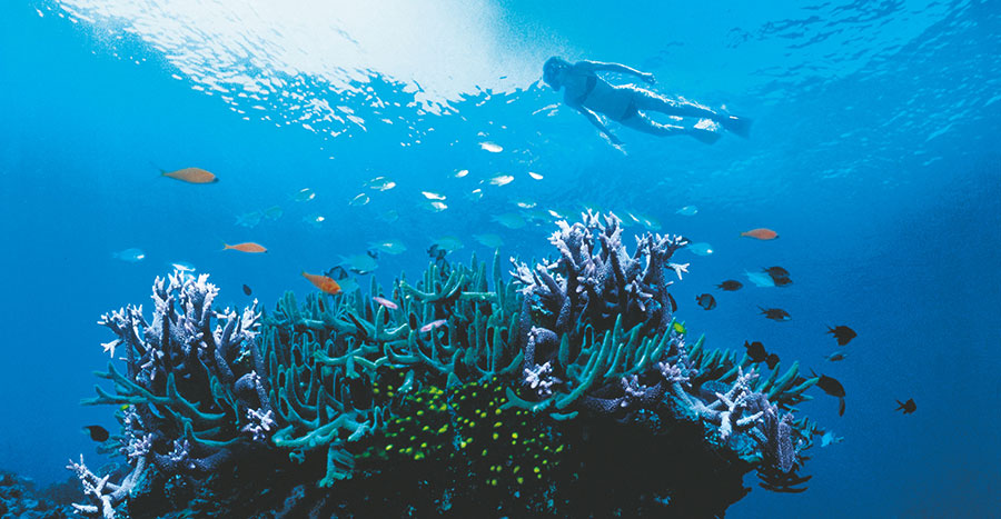 Australia Great Barrier Reef Vacation - diving at Lizard Island