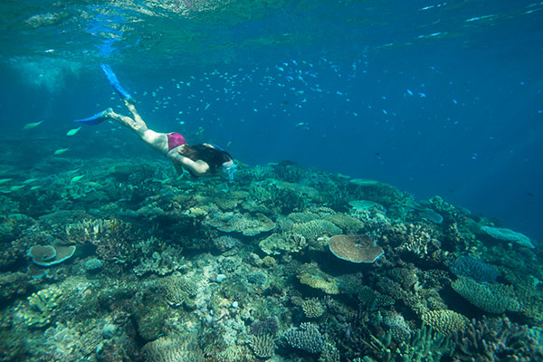 Is All Inclusive Right for You - Snorkeling Fiji