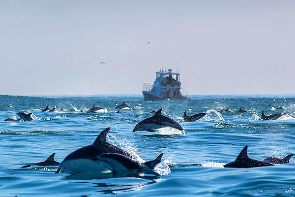 Kaikoura, New Zealand Travel Guide - Swimming with Dolphins