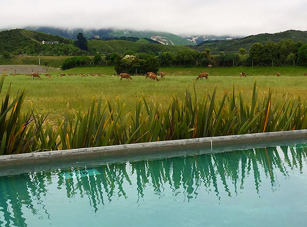 Kaikoura, New Zealand Travel Guide - View at Hapuku Lodge