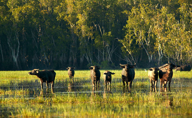 Australia Wildlife Vacations - Outback Adventure Vacations - Crocodile Dundee - Bamurru Plains Northern Territory