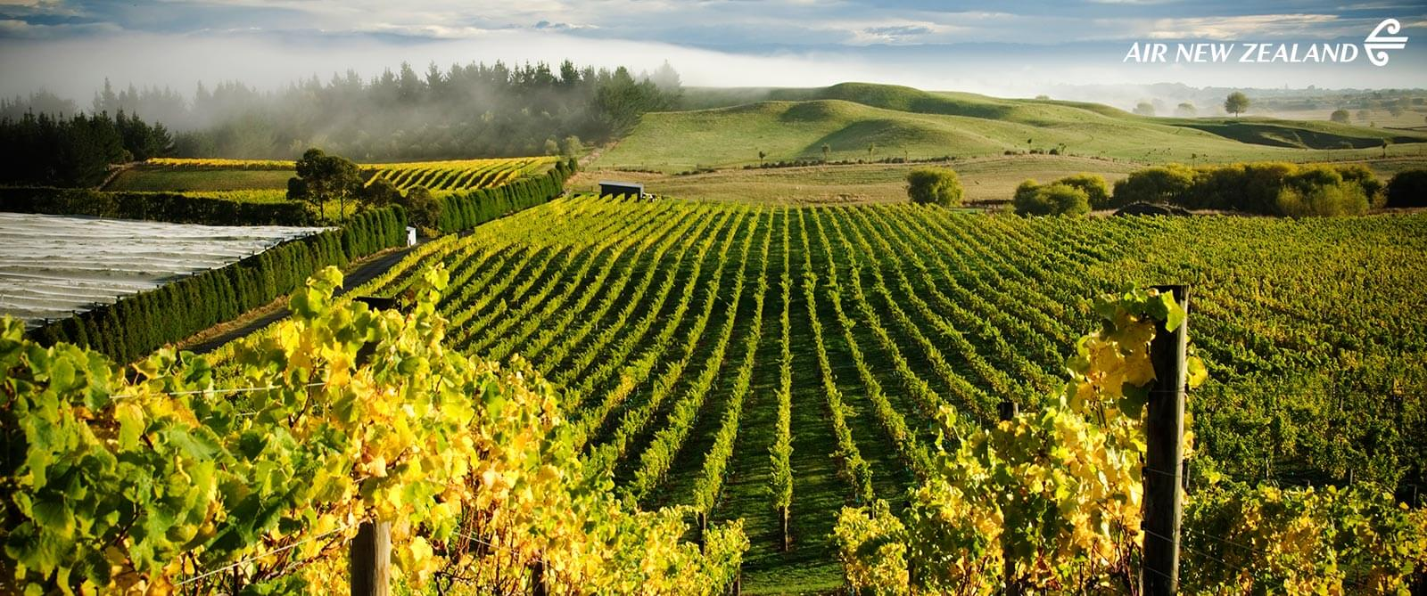 Millar Road, Hawke's Bay Vineyards - New Zealand Highlights: Scenery, Adventure, and Wine Package