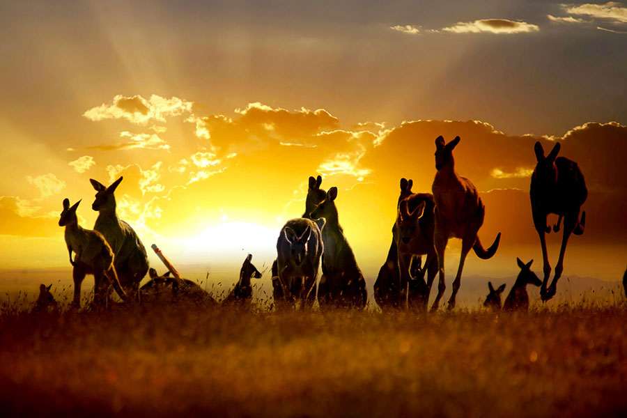 Down Under Endeavours - Luxury Travel Agency - Join Our Team