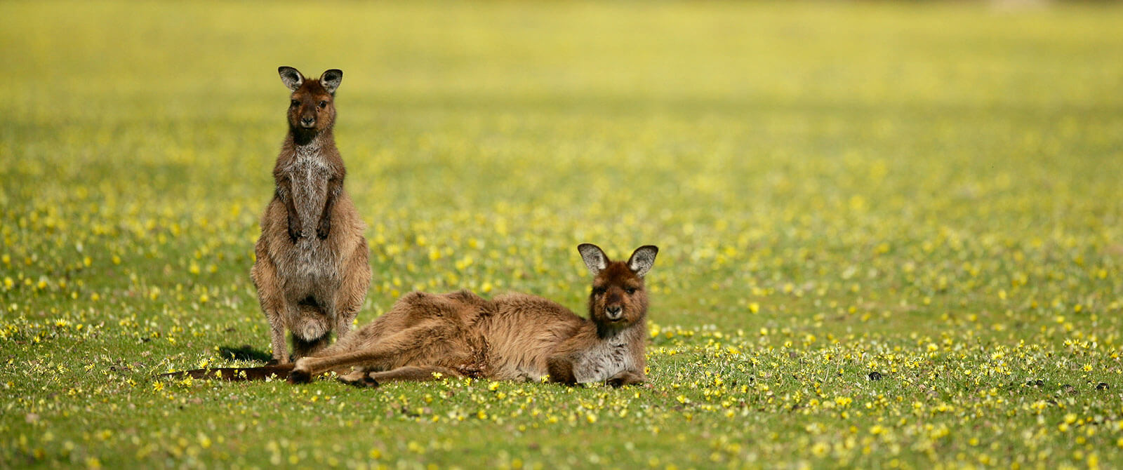Wildlife on Kangaroo Island - Exceptional Kangaroo Island Touring - Australia Getaway: Sunshine Coast and Kangaroo Island