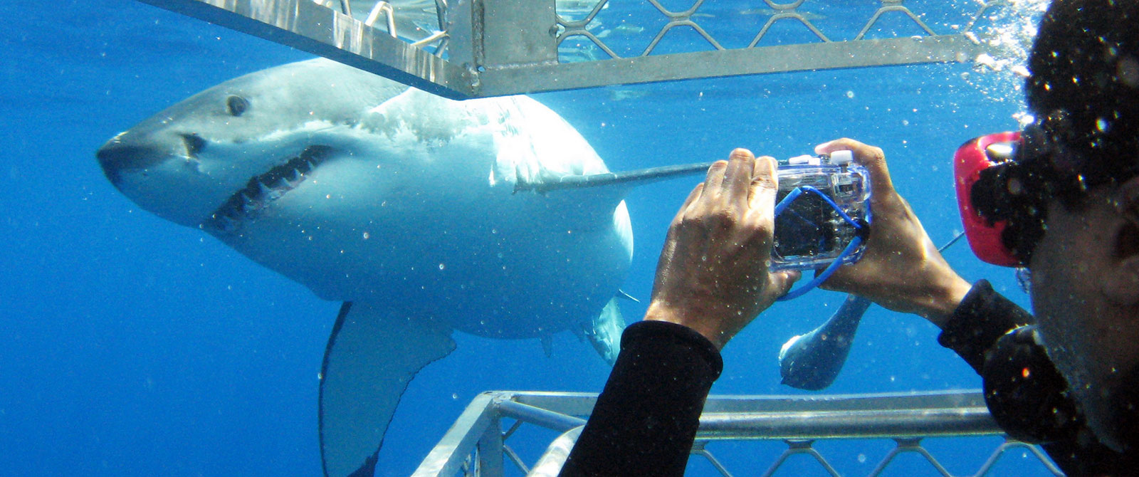 Wildlife Adventure Australia - Kangaroo Island Vacations - Great White Shark Cage Diving in Port Lincoln Australia