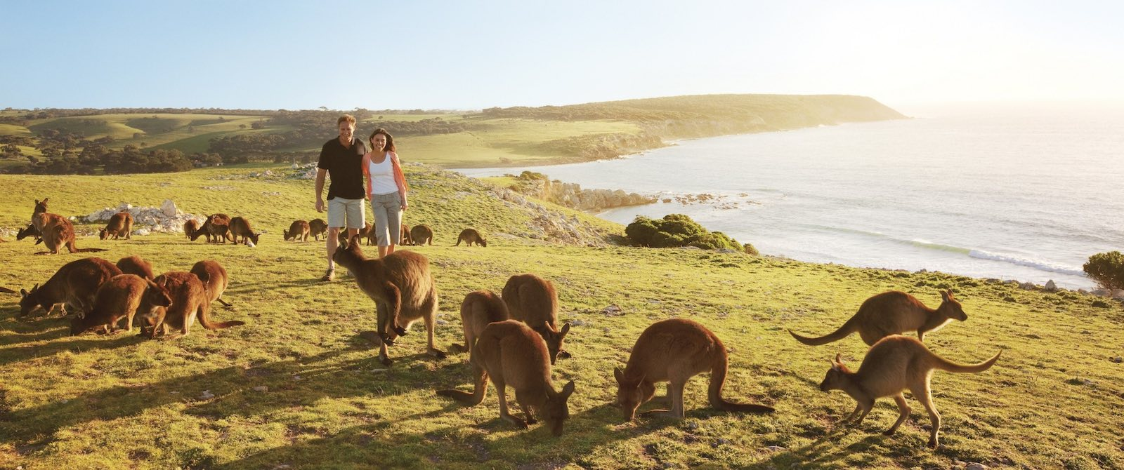 Wildlife Adventure Australia - Kangaroo Island Vacations