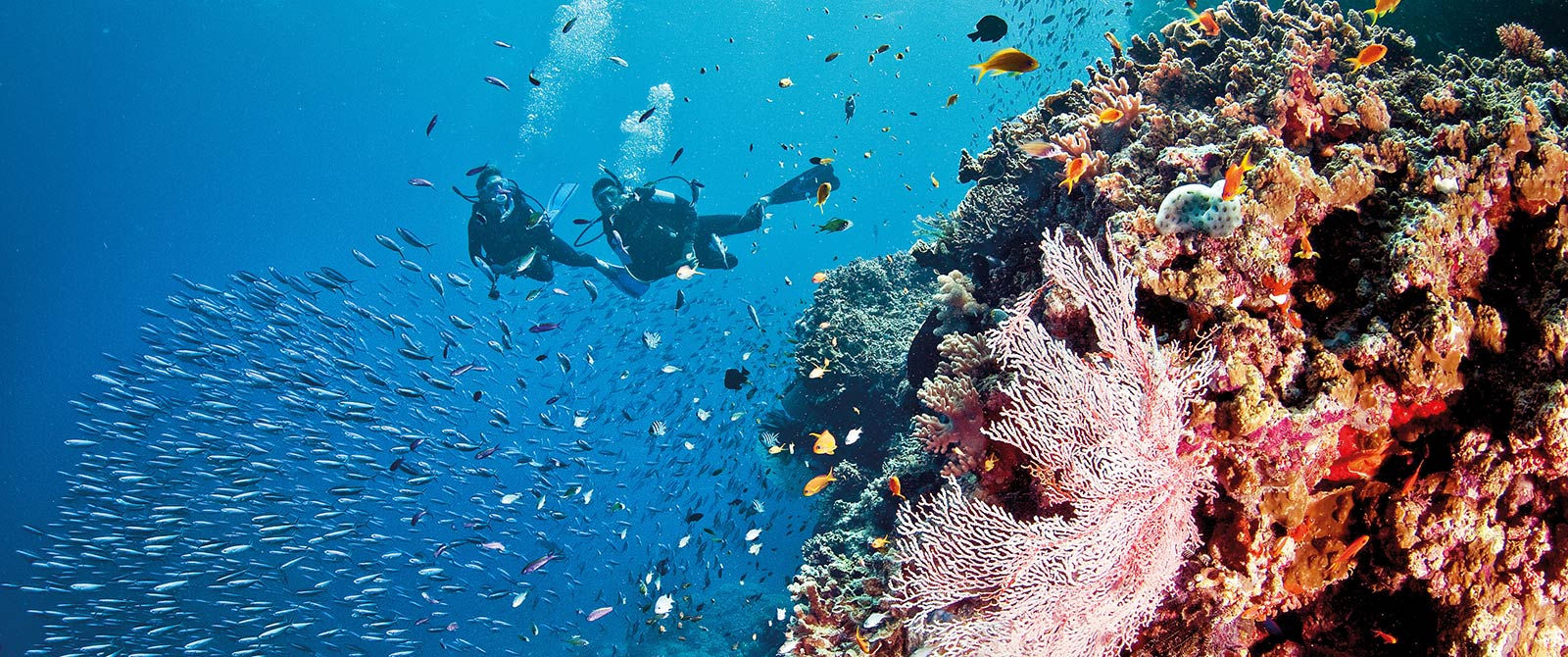 Great Barrier Reef Vacations Australia - Best Great Barrier Reef Tours