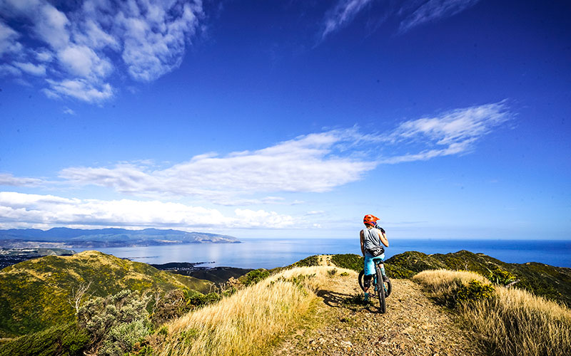 Cycling in Wellington with ocean views