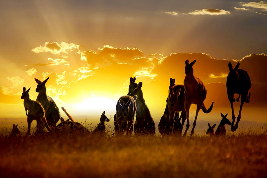 Down Under Endeavours - Luxury Travel Agency - Careers in Travel