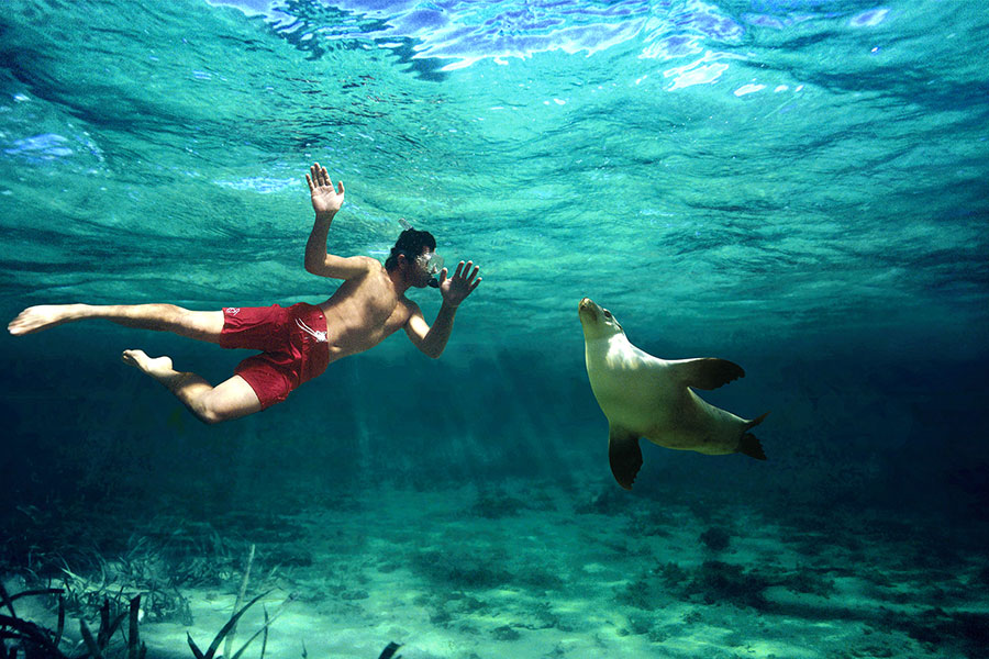 Swimming With Sea Lions - Best Travel Agency - Australia, New Zealand, Fiji, Tahiti, Cook Islands