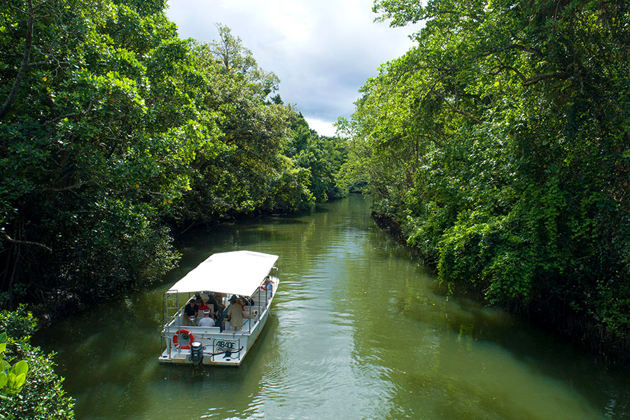 Keep an eye out for crocs while cruising along the Daintree River!