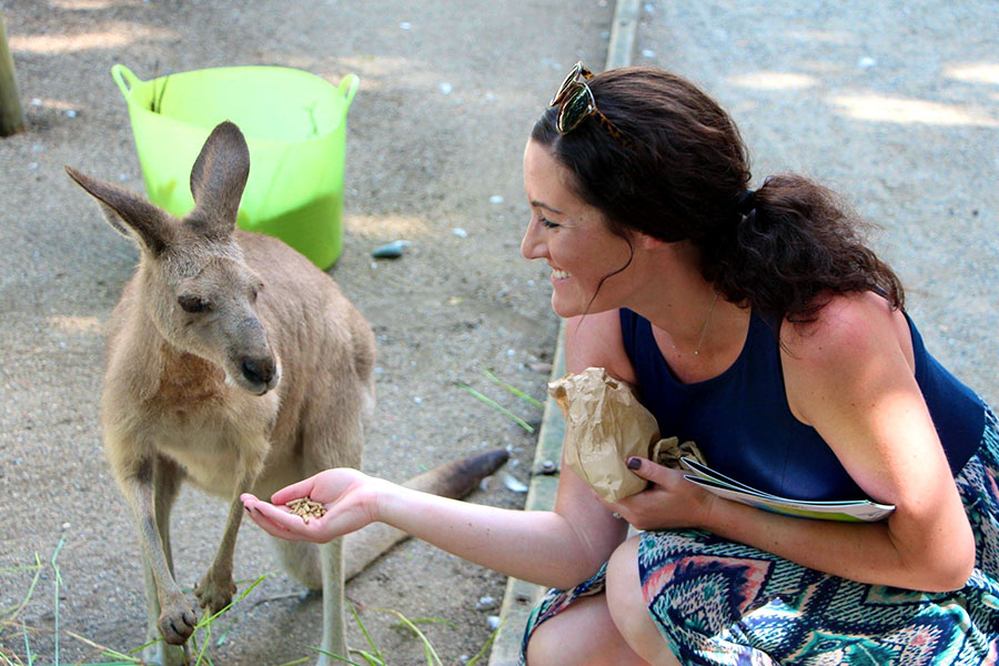 Feed kangaroos and other Aussie animals at Wildlife Habitat Port Douglas