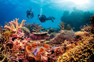 Diving amongst colorful corals in the Great Barrier Reef