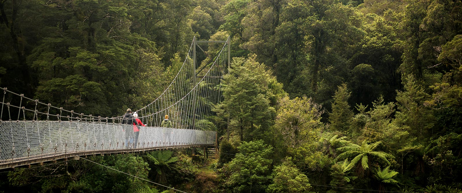 Hollyford Track New Zealand - Swing Bridge Through Native Rainforest